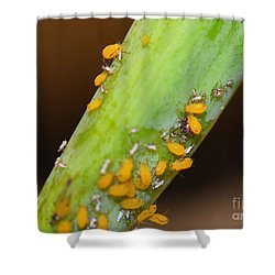 Golden Aphids Shower Curtain