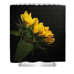Shower Curtain featuring the photograph Golden Beauty by Judy Vincent
