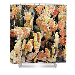 Shower Curtain featuring the photograph Golden Beaver Tail Catcus by Linda Phelps