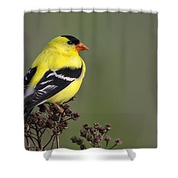 Golden Bird Shower Curtain by Mircea Costina Photography