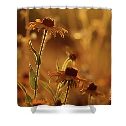 Golden Black Eyed Susan Shower Curtain