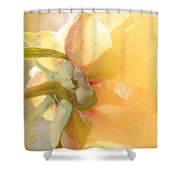 Golden Bowl Tree Peony Bloom - Back Shower Curtain