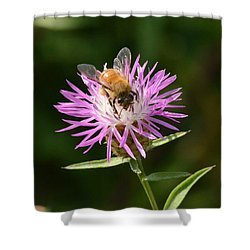 Golden Boy-bee At Work Shower Curtain