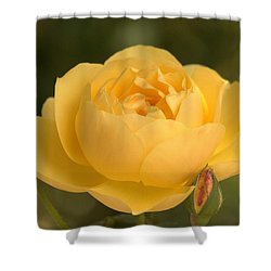 Golden Breath Shower Curtain by Amy Gallagher