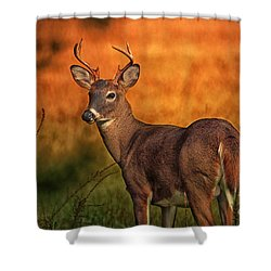 Golden Buck Shower Curtain