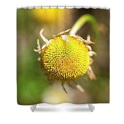 Golden Burst Shower Curtain
