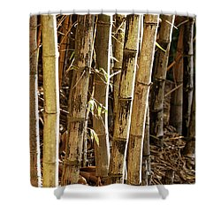 Shower Curtain featuring the photograph Golden Canes by Linda Lees