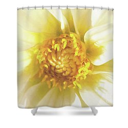 Golden Centre Shower Curtain by Kim Andelkovic