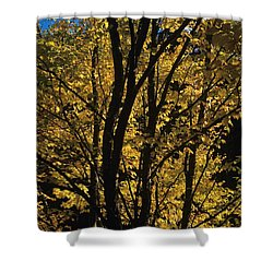 Golden Colors Of Autumn In New England  Shower Curtain by Erin Paul Donovan