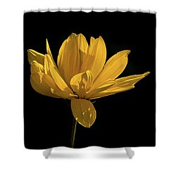 Shower Curtain featuring the photograph Golden Coreopsis by Jacqi Elmslie