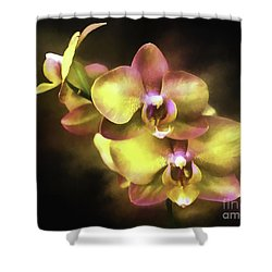 Golden Days Shower Curtain by Ken Frischkorn