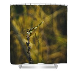 Golden Drangonfly Shower Curtain