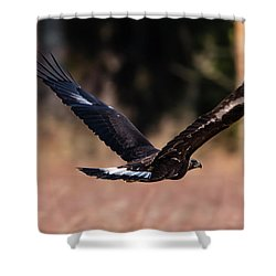 Shower Curtain featuring the photograph Golden Eagle Flying by Torbjorn Swenelius