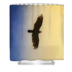 Golden Eagle Over Friday Harbor Shower Curtain by Juli Ellen