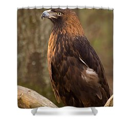 Golden Eagle Resting On A Branch Shower Curtain by Chris Flees