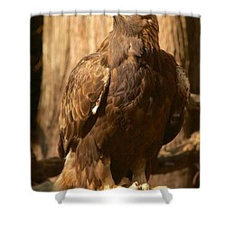 Golden Eagle Shower Curtain by Sean Griffin