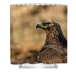 Golden Eagle Shower Curtain by Torbjorn Swenelius