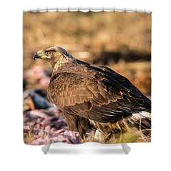 Golden Eagle's Back Shower Curtain by Torbjorn Swenelius