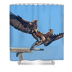 Golden Eagle Courtship Shower Curtain