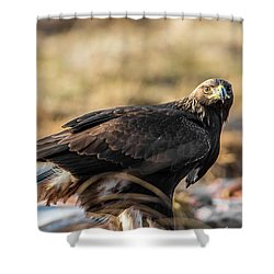 Golden Eagle's Glance Shower Curtain by Torbjorn Swenelius