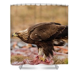 Golden Eagle's Profile Shower Curtain by Torbjorn Swenelius