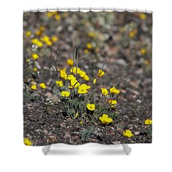 Shower Curtain featuring the photograph Golden Poppy by Suzanne Oesterling