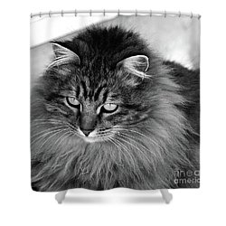 Golden Eyes Two Shower Curtain