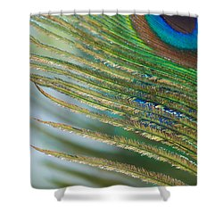 Golden Feather Shower Curtain by Lisa Knechtel