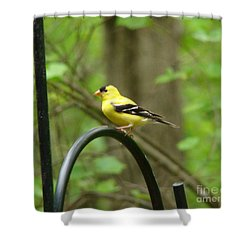 Golden Finch Shower Curtain