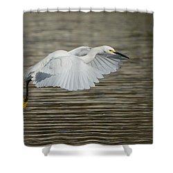 Golden Flight Shower Curtain by Fraida Gutovich
