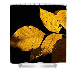 Golden Glow Shower Curtain by Christopher Holmes