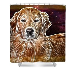 Shower Curtain featuring the photograph Golden Glowing Retriever by EricaMaxine  Price