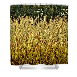 Golden Grasses Shower Curtain by Meirion Matthias