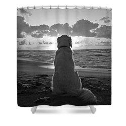 Golden Labrador Watching Sunset Shower Curtain by Sumit Mehndiratta