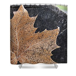 Shower Curtain featuring the photograph Golden Lace Leaf Against A Grey Log by Kelly Hazel