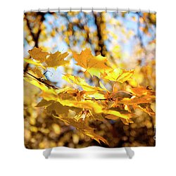 Shower Curtain featuring the photograph Golden Leaves by Ivy Ho