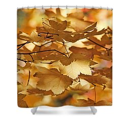 Golden Light Autumn Maple Leaves Shower Curtain by Jennie Marie Schell