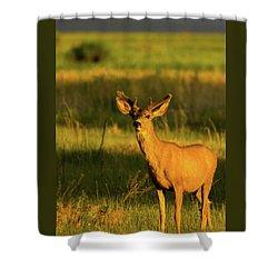 Golden Light Buck II Shower Curtain