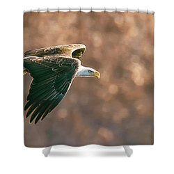 Golden Light Shower Curtain by Kelly Marquardt