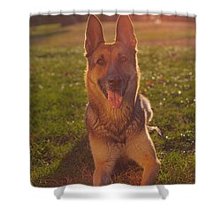 Golden Light Of Summer Shower Curtain by Brian Cross