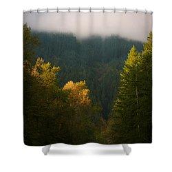 Golden Light Shower Curtain by Priya Ghose