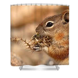 Golden-mantled Ground Squirrel Eating Prickly Spine Shower Curtain