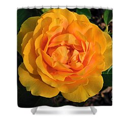 Shower Curtain featuring the photograph Golden Memories by Sandy Molinaro