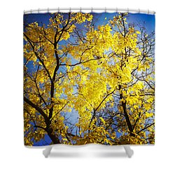 Golden October Tree In Fall Shower Curtain by Matthias Hauser