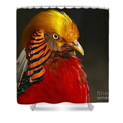 Golden Ornamental Pheasant Shower Curtain