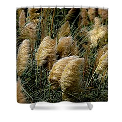 Golden Pampas In The Wind Shower Curtain