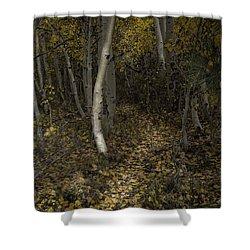 Golden Path Shower Curtain