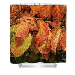 Shower Curtain featuring the photograph Golden by Peggy Hughes