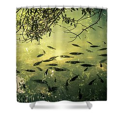 Golden Pond With Fish Shower Curtain