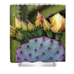 Shower Curtain featuring the photograph Golden Prickly Pear Buds  by Saija Lehtonen